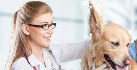 Очистка ушного прохода у ветеринара