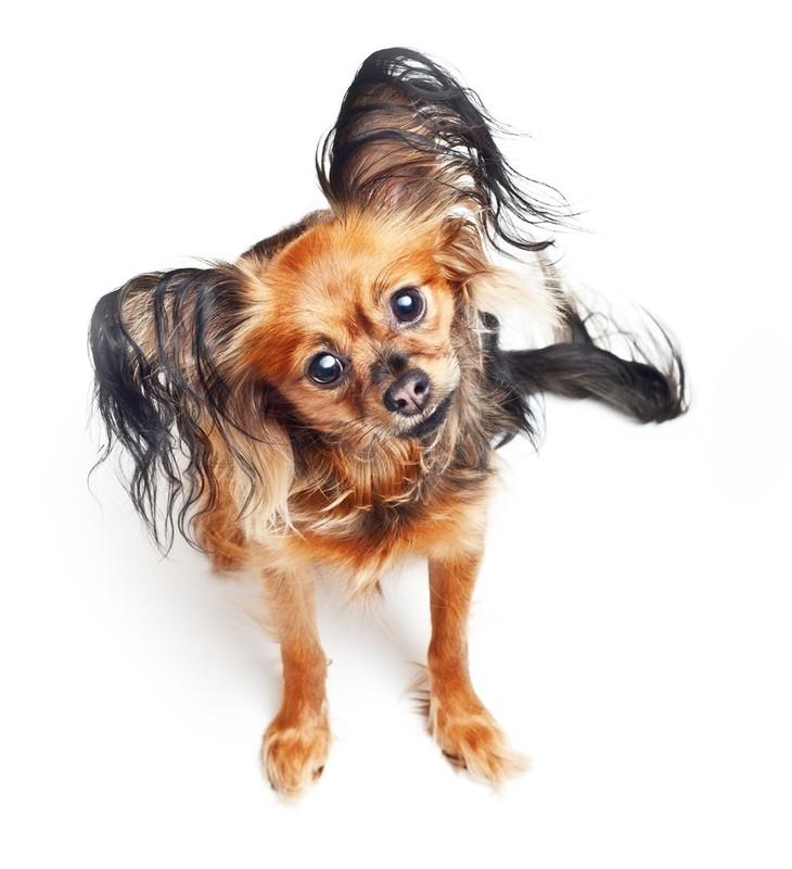 Йоркширский терьер уход и воспитание щенка