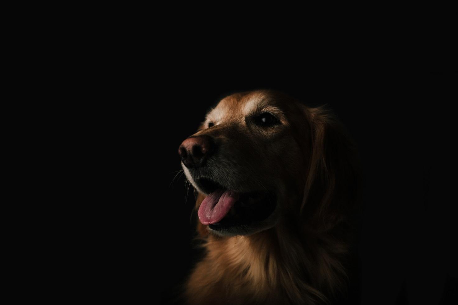 У собаки сопли и кашель