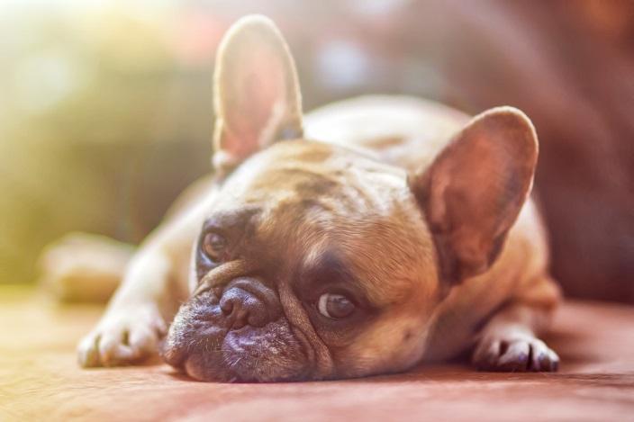 Что может вызвать внутреннее кровотечение у собаки