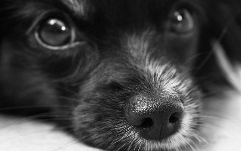 Внутреннее кровотечение у собак