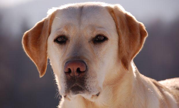 Если собака умирает дома что делать