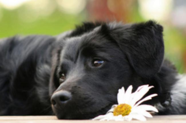 У собаки умерли щенки что делать