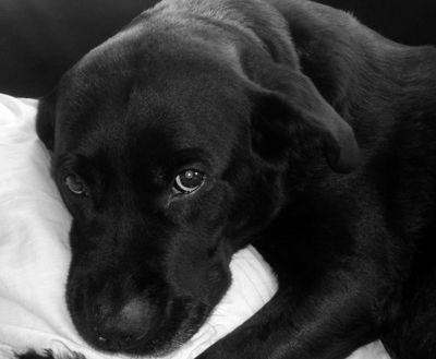 Что делать с умершей собакой