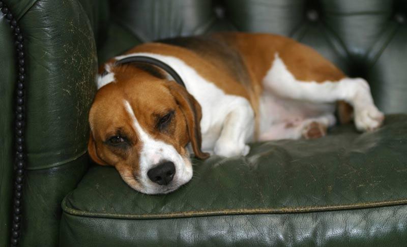 Что делать если умерла любимая собака