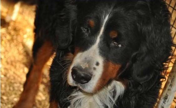 Что делать если собака заболела?