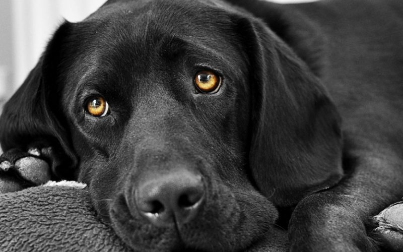 Умерла собака что делать