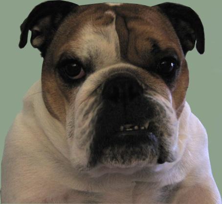 Собака хрюкает носом. Что это?
