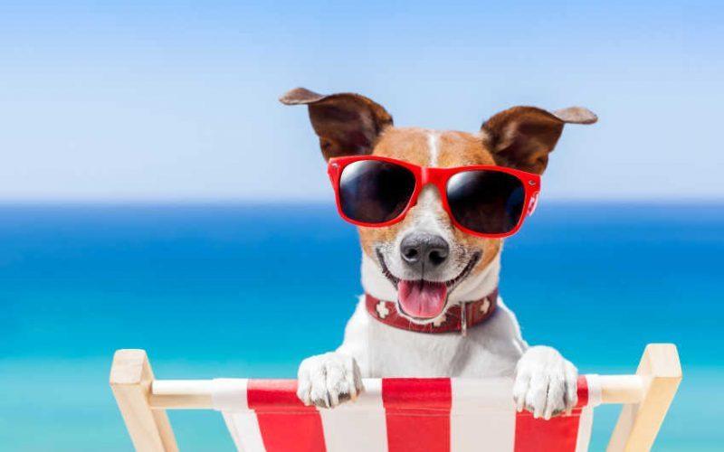 Собачьи праздники