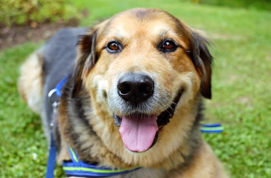 Отит у собак симптомы и лечение