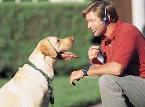 Как можно понять собаку - Учимся понимать свою собаку