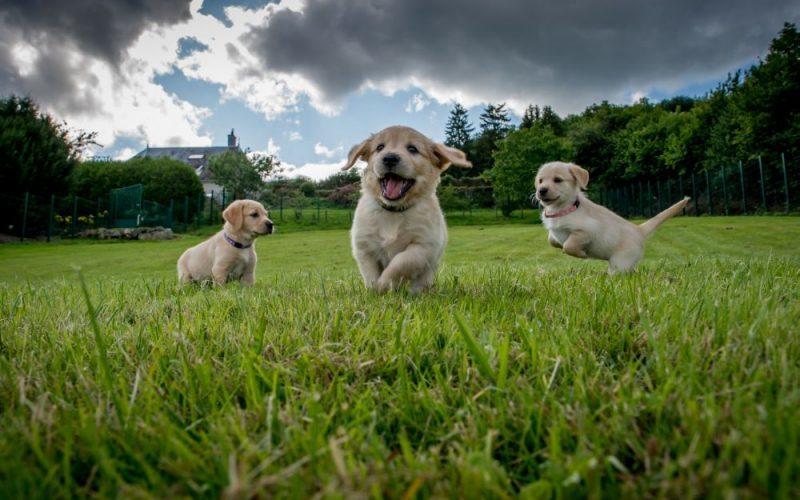 Как выбрать собаку - Какую собаку лучше выбрать