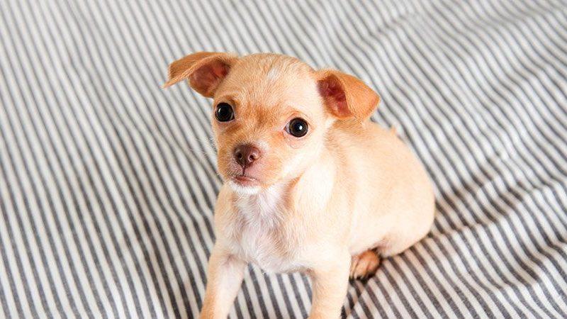 Основы воспитания щенка