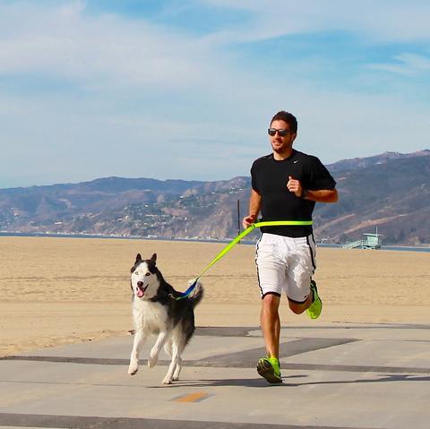 Прогулки и пробежки с собакой