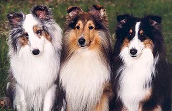 Собаки без запаха