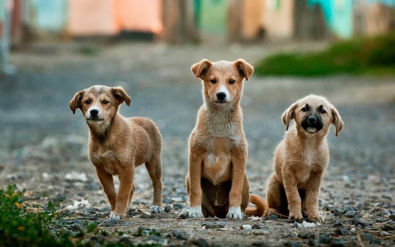 У собаки сопли что делать